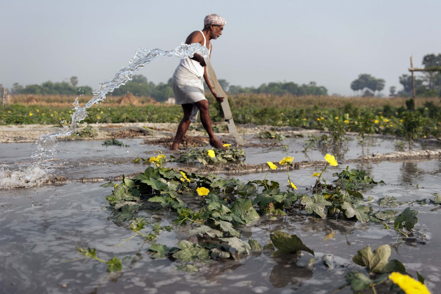 Digital Green in Bihar