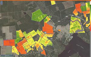 Satellite based yield estimation